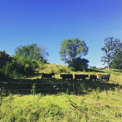 Welcome cows!! Looking forward to learning about #rotationalgrazing from our neighbors