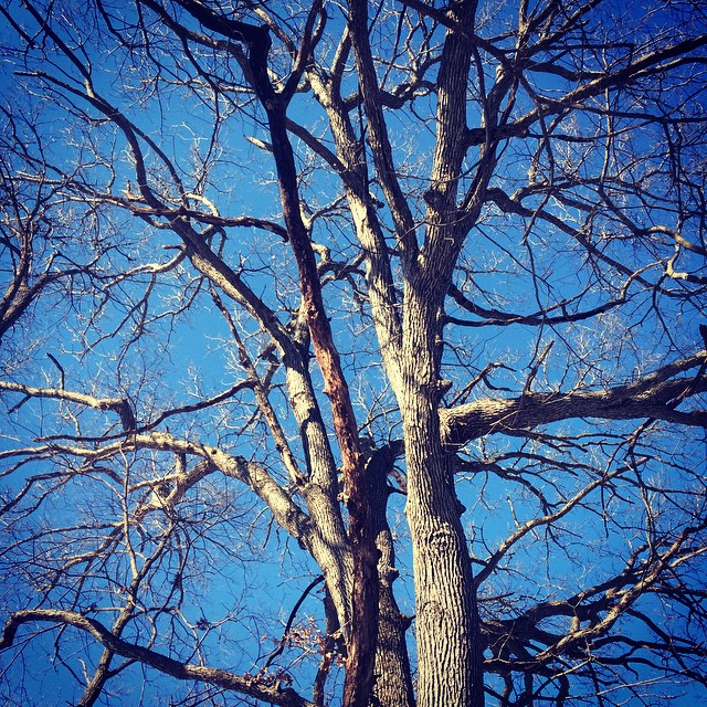 I can't stop taking pictures of oak trees