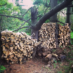 Oak, elm and boxelder. I have no sense of how much wood we'll need for the dome this winter (not pic