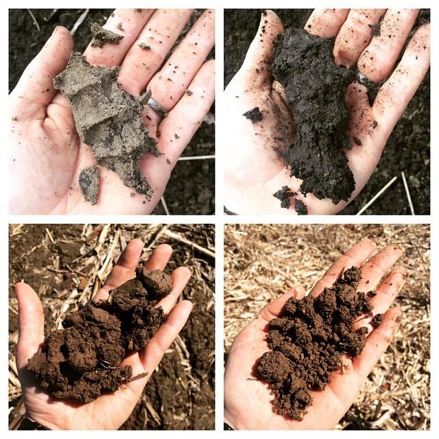 Seeds Farm, Burtness Farm and New Farm soils