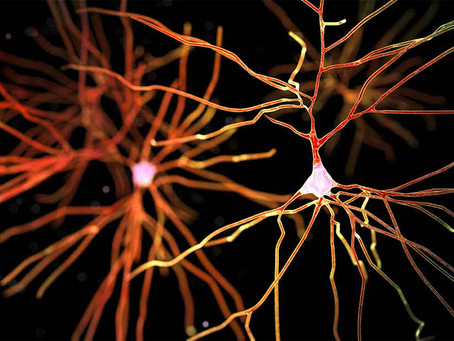 Fat To Foraging: The Life-Changing Magic Of Conscious Dopamine Source Conversion