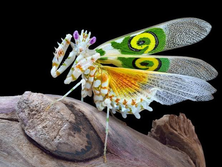 Infinite Variations: When Nature Gives Itself Full Permission To Diversify - The Magic Of Insects