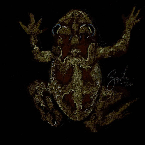 Toad 4
