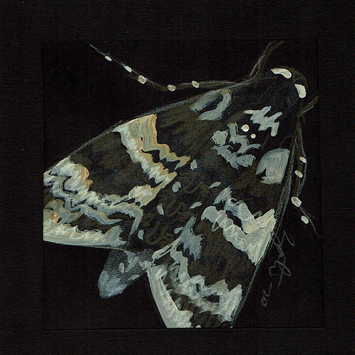 Moth Friend