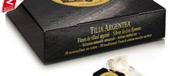 MF - Tilia Argentea