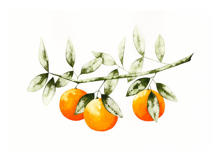 Orange branch - limited edition print