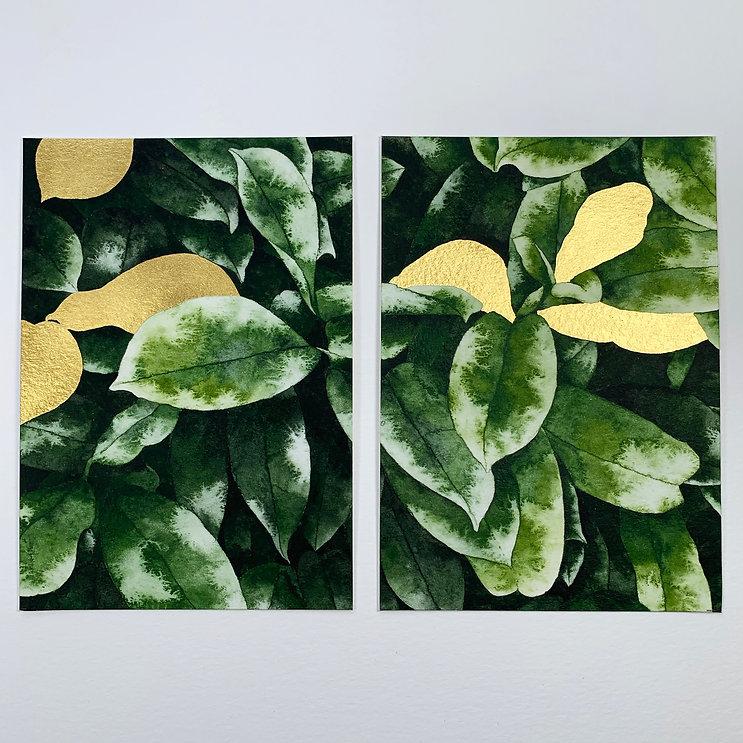 AOAP foliage 2.jpg