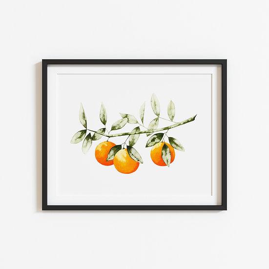 The Orange Branch