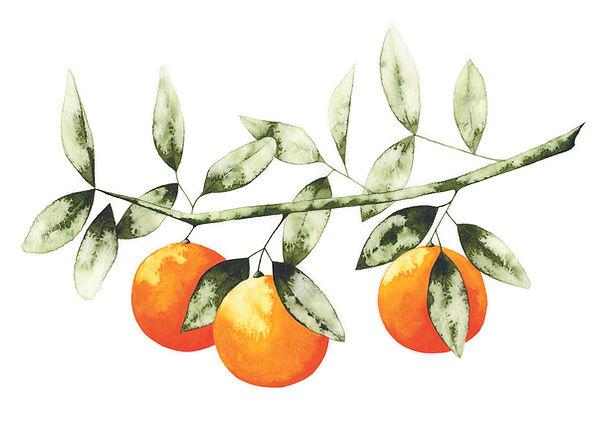 orange branch.jpg