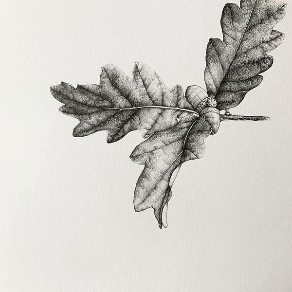 Oak leaf complete.jpg