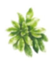 Leaf%20study%20RGB_edited.jpg