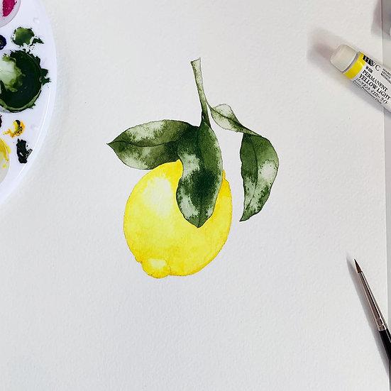 Little Amalfi Lemon