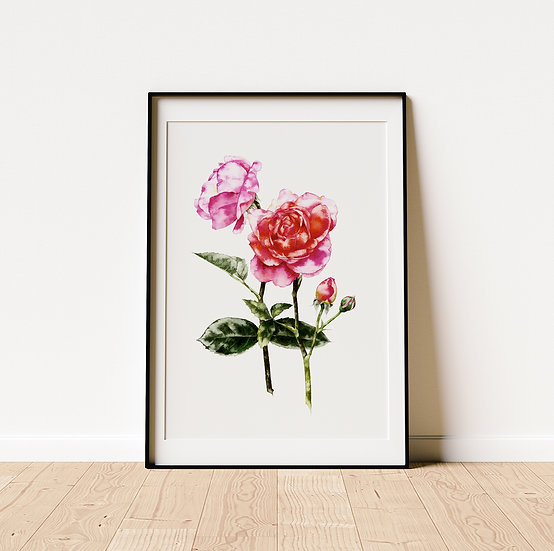 Roses from the Garden - limited edition print
