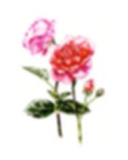 RosesMk2-3.jpg