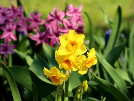 5 Springtime Plants to Boost Your Curb Appeal