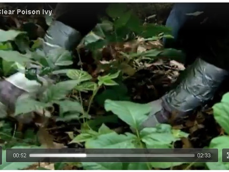 How To Clear Poison Ivy