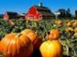 New England Fall Events