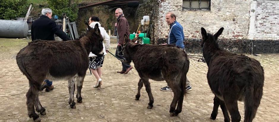 Happy Donkeys 😎