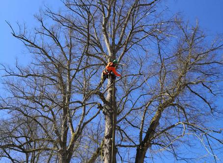 Eine (nicht) alltägliche Baumpflege