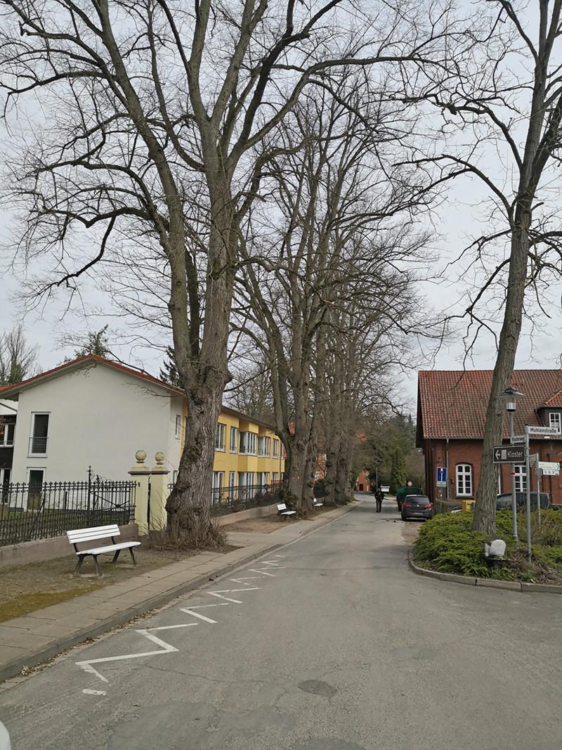 Klosterweg in Medingen mit Lindenbäumen