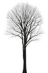 Silhouette eines Laubbaums