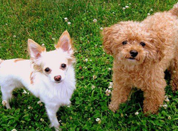 Dogs that were killed at Gibsons