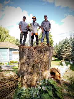 Lata Tree Service teamwork! We removed this very large elm that was impeding on garden space. We fell the limbs right between the garden and cement pad.