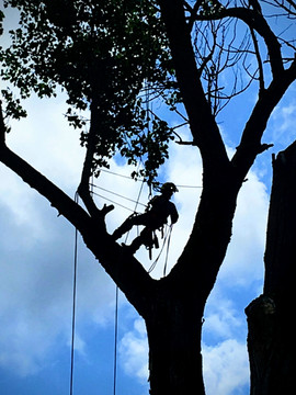 If you don't want heavy equipment on your space or if there is simply not enough room, we can easily climb trees to trim or remove them.