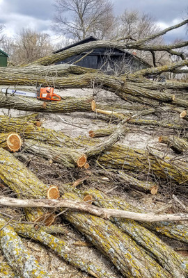We are able to cut trees and remove all of the wood and limbs, if needed!