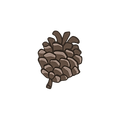 Pine Cone 4_edited.png
