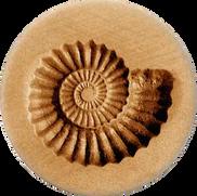 ammonite nautilus shell springerle cooki