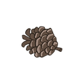 Pine Cone 4_edited_edited.png