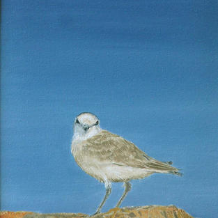 Plover Play