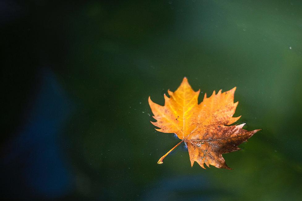 restorative_blurred-background-bright-close-up-2059532_web.jpg