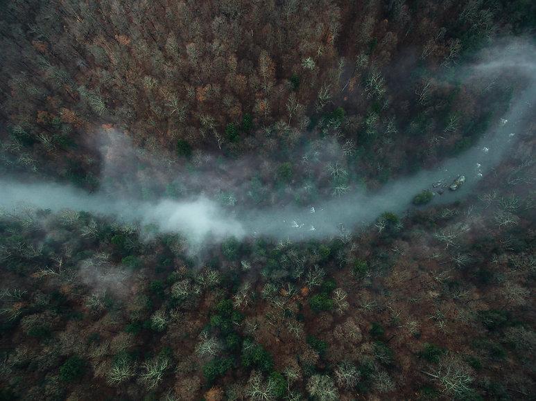 Mconnels Mills fog .jpg