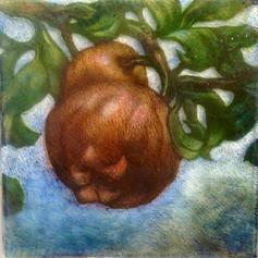Pomegranate (detail)