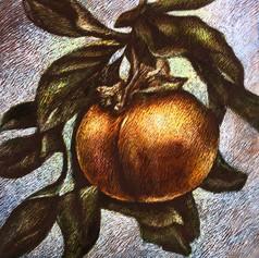 Persimmon, (detail)