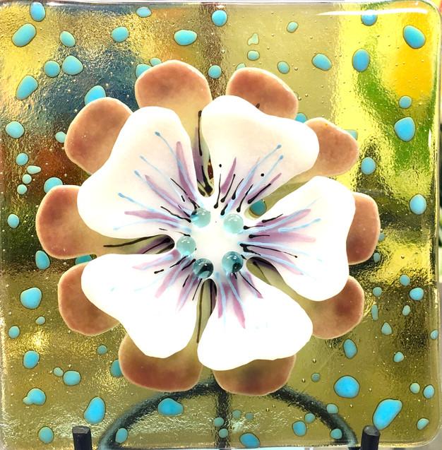 White Flower/TR Yellow