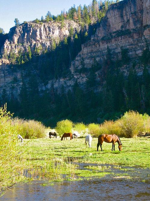 Sweet Pastures