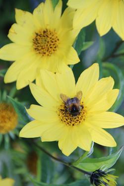 Von Blumen und Bienen...