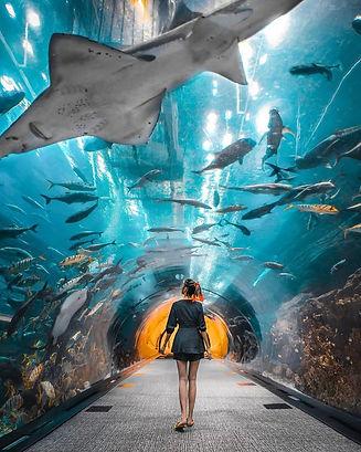 The-Dubai-Aquarium.jpg