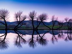 Twilight Dancing Trees