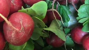 Les aillets, asperges et radis cerises sont sortis de terre ! Et ré-ouverture jusqu'à 19 h