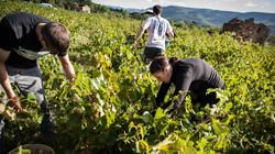 La viticulture des Hauts Cantons, caves