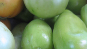 Vite,on met les tomates vertes en confiture !