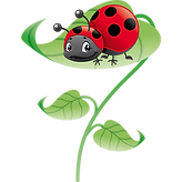 coccinnelle ok ok.png