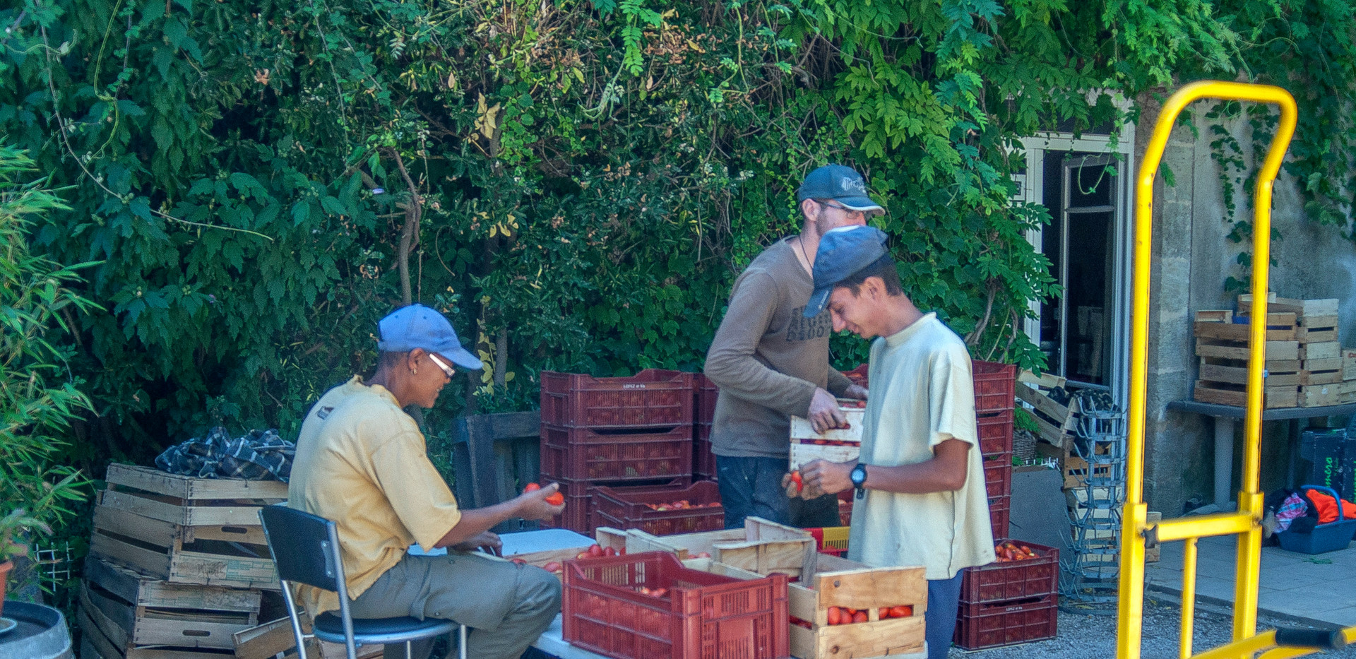 Récolte et tri des fruits et légumes au Domaine l'Hort del Gal Béziers
