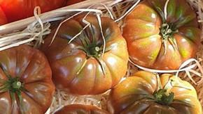 Les tomates arrivent ! Et le muguet du 1er mai aussi !