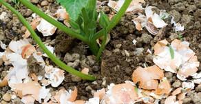 Halte aux limaces & escargots qui grignottent nos plantes !