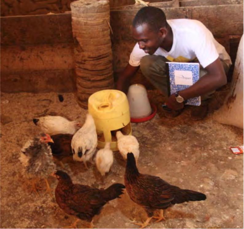 Chicken Cooperative1